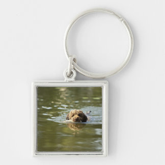 A playful dog cools off in the summer heat. key ring