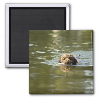 A playful dog cools off in the summer heat. magnet