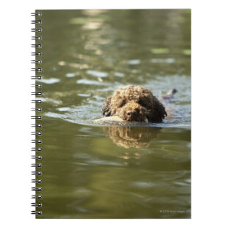 A playful dog cools off in the summer heat. notebook