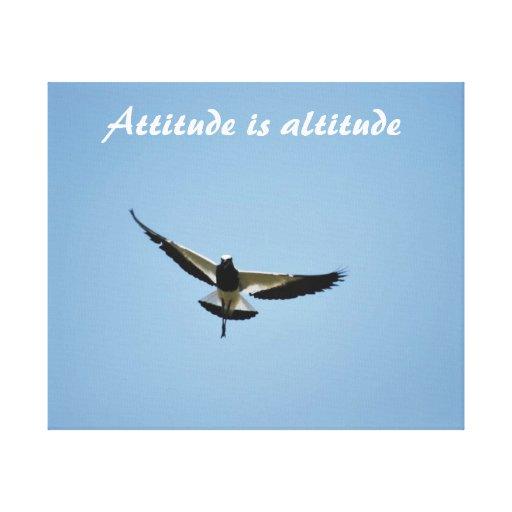 A Plover bird with attitude Canvas Prints