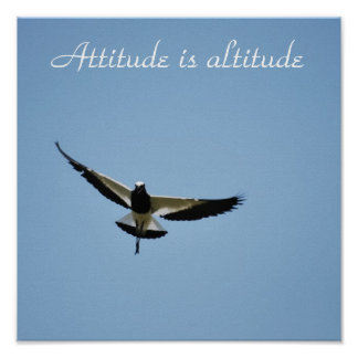 A Plover  bird with attitude Print