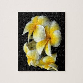 A Plumeria, Yellow & White Puzzle