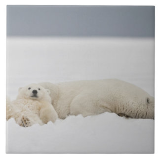 A polar bear cub lies in snow with it's mother tile