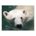 A polar bear just chilling custom announcements