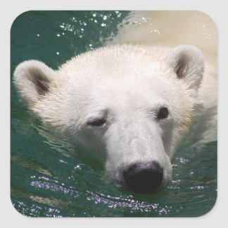 A polar bear just chilling square sticker