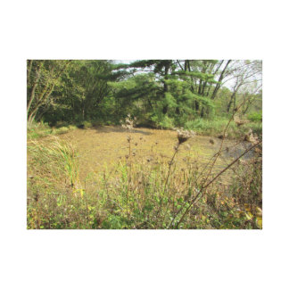 A Pond in the Woods Photography Wall Art