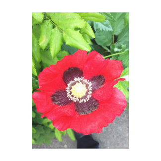 A Poppy In London Canvas Print