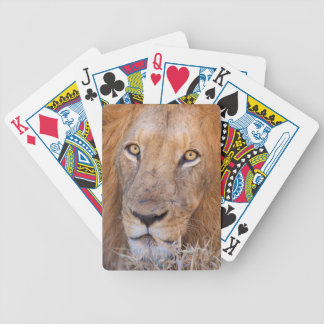 A portrait of a Lion Bicycle Playing Cards