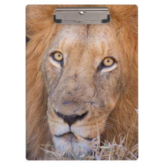 A portrait of a Lion Clipboard