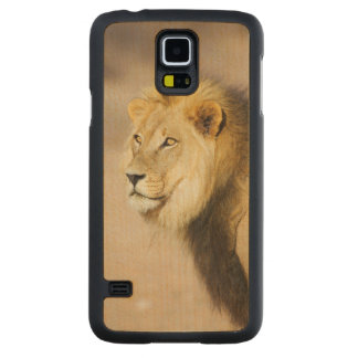 A portrait of a Lion, Kgalagadi Transfrontier Park Carved Maple Galaxy S5 Case