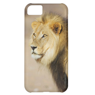 A portrait of a Lion, Kgalagadi Transfrontier Park iPhone 5C Case