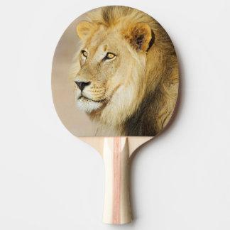 A portrait of a Lion, Kgalagadi Transfrontier Park Ping Pong Paddle