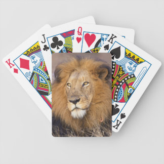 A portrait of a Lion looking into the distance Bicycle Playing Cards