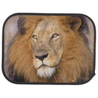 A portrait of a Lion looking into the distance Car Mat