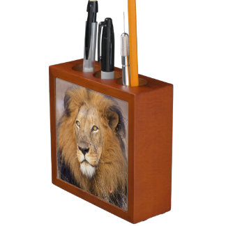 A portrait of a Lion looking into the distance Desk Organiser