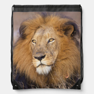 A portrait of a Lion looking into the distance Drawstring Bag