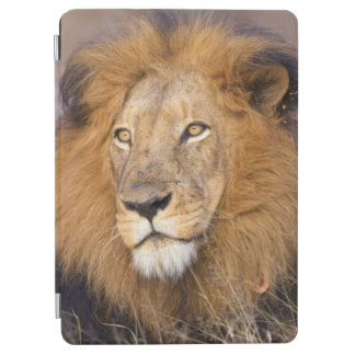 A portrait of a Lion looking into the distance iPad Air Cover