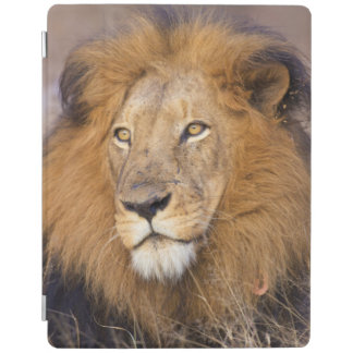 A portrait of a Lion looking into the distance iPad Cover