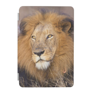 A portrait of a Lion looking into the distance iPad Mini Cover