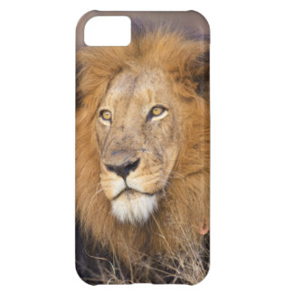 A portrait of a Lion looking into the distance iPhone 5C Case