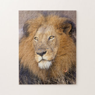 A portrait of a Lion looking into the distance Jigsaw Puzzle