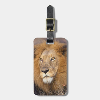 A portrait of a Lion looking into the distance Luggage Tag
