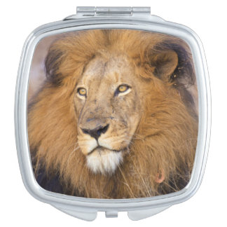 A portrait of a Lion looking into the distance Makeup Mirror