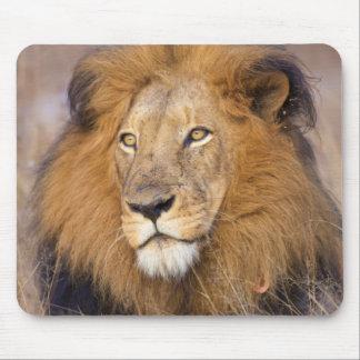 A portrait of a Lion looking into the distance Mouse Mat