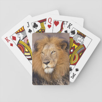 A portrait of a Lion looking into the distance Poker Deck