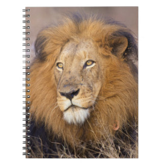 A portrait of a Lion looking into the distance Spiral Notebook