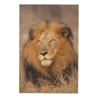 A portrait of a Lion looking into the distance Wood Wall Decor