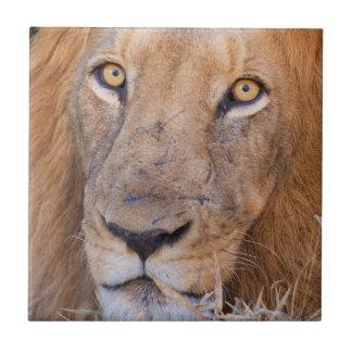 A portrait of a Lion Tile