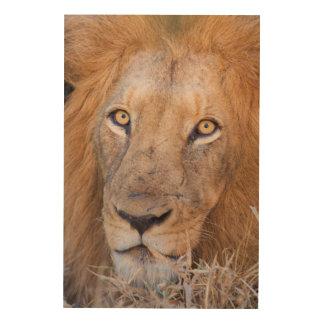 A portrait of a Lion Wood Print