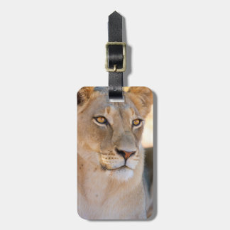 A portrait of a Lioness looking into the distance Bag Tag