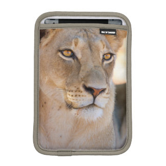 A portrait of a Lioness looking into the distance iPad Mini Sleeve