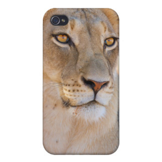 A portrait of a Lioness looking into the distance iPhone 4 Cases