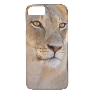 A portrait of a Lioness looking into the distance iPhone 8/7 Case