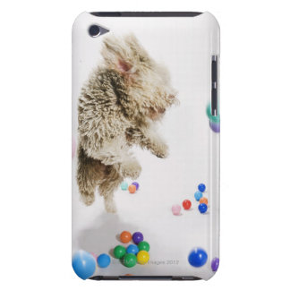 A Portuguese Waterdog jumping amongst falling iPod Case-Mate Case