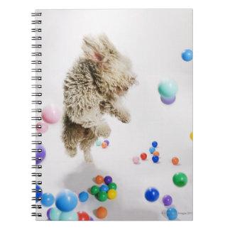 A Portuguese Waterdog jumping amongst falling Notebooks