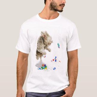 A Portuguese Waterdog jumping amongst falling T-Shirt