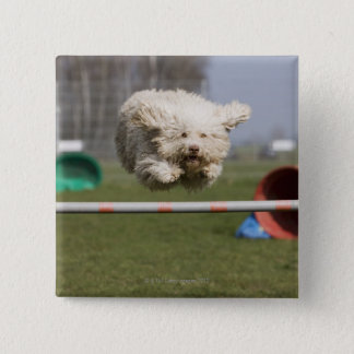 A Portuguese Waterdog jumping over a hurdle 15 Cm Square Badge