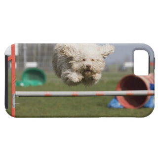 A Portuguese Waterdog jumping over a hurdle iPhone 5 Cover