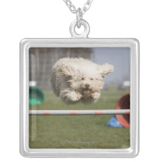 A Portuguese Waterdog jumping over a hurdle Silver Plated Necklace