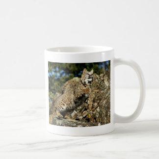 A Pouncing Bobcat Basic White Mug
