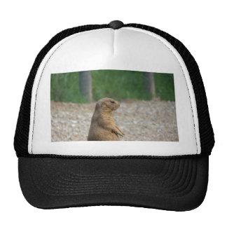 A Prairie Dog Mesh Hat