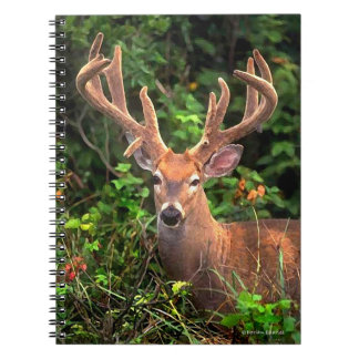 """A Prince of the Forest"" Notebook"