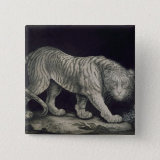 A Prowling Tiger (pencil on paper) 15 Cm Square Badge