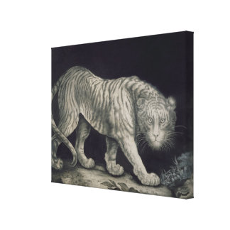 A Prowling Tiger (pencil on paper) Canvas Print