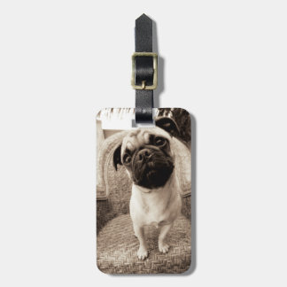 A Pug with its Head Titled to the Side Luggage Tag