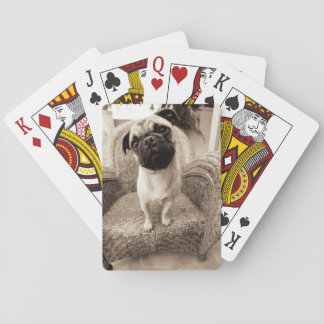 A Pug with its Head Titled to the Side Playing Cards
